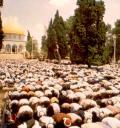 ishmaelite_prayer_gallery.jpg