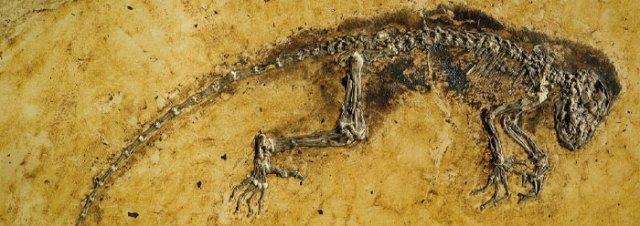 ida_fossil_wide